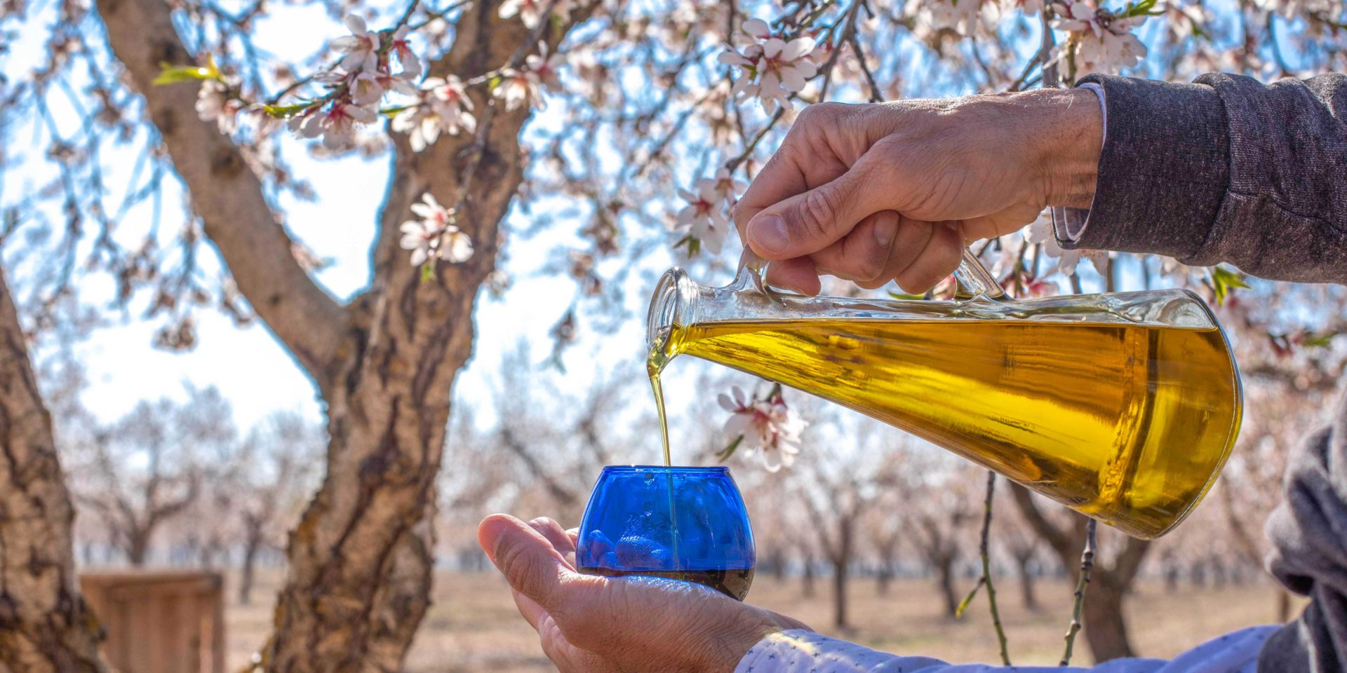 oliva arbequina experiencies garrigues
